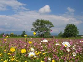 Wiosenna łąka w Górach Bystrzyckich