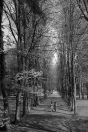 Aleja w Parku Zdrojowym w Długopolu-Zdroju, fot. Tadeusz Scelina (ok. 1950 r.)