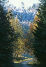Droga w Górach Bystrzyckich