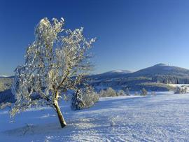 Masyw Śnieżnika, widok na Czarną Górę